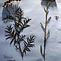 Expositions botanique