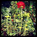 La photo du mois de novembre : la <b>vie</b> en <b>rose</b>