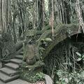Ubud - Forêt des Singes