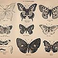 Porté par des papillons