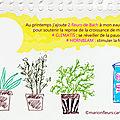 Printemps, plantes vertes, jeunes pousses et arrosage vitalisé aux fleurs de Bach