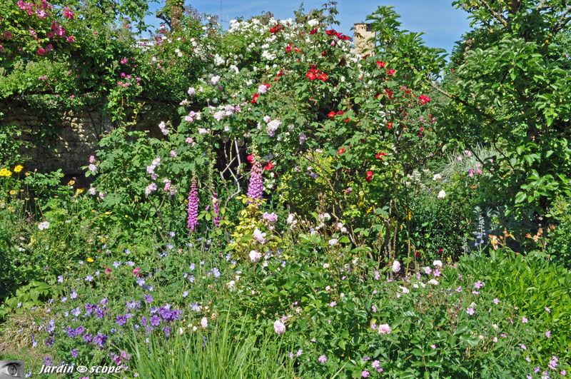 Un savant mélange de rosiers et de plantes vivaces