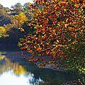 L'automne au bord du lac