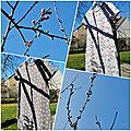 Papillons et plumes de pigeon sur un arbre perché