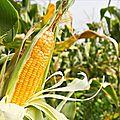 Marchés agricoles: Deux coopératives déjà retenues à l'Ouest
