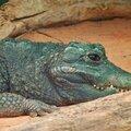 La Temade - Août 2014 - La Ferme aux Crocodiles.