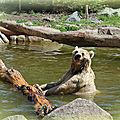 Retour au zoo d'amnéville