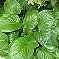Les plantes de la cour en août - 3