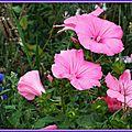 Prairie fleurie 1108156