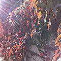 Rouges feuilles