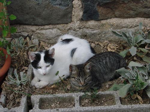 2008 08 23 Deux chats