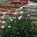 Fleurs de Léon 1207