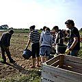 13 septembre : le chantier patates habituel à la tindière