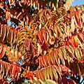 28-10-11 Feuilles d'automne