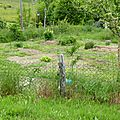 Jardin, permaculture et compagnie ...