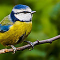 Biodiversité et <b>migrations</b>