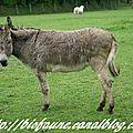 La sauvegarde des <b>ânes</b> passe aussi par les éprouvettes !