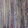 Forêt #60.