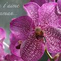 Orchidée Fête des Mères