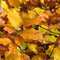 L'<b>automne</b>