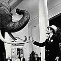 Dresseur de siam, le légendaire éléphant du zoo de vincennes, ruppert bemmerl s'est éteint