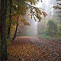 2015-10-30 automne Lorrain