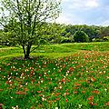 Le jardin botanique jean-marie pelt