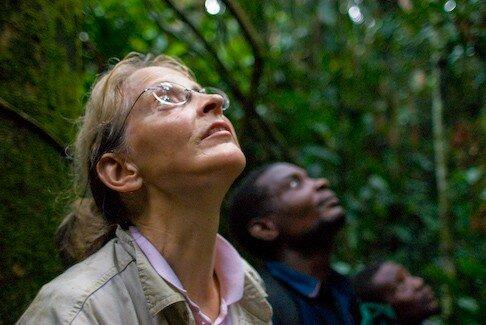 Dans la canopée, les bonobos sauvages