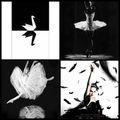 Black swan...un signe du destin