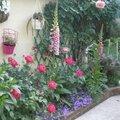 Qqx photos de notre jardin (une partie)
