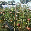 L'excellence en matière de jardins partagés tome 2