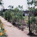 jardin de la ferme