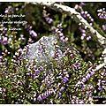 La lande endormie (the asleep heath)