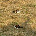 chats de Provence