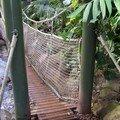 Serre Amazonienne (131)