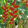 fleurs-rouges-jaunes