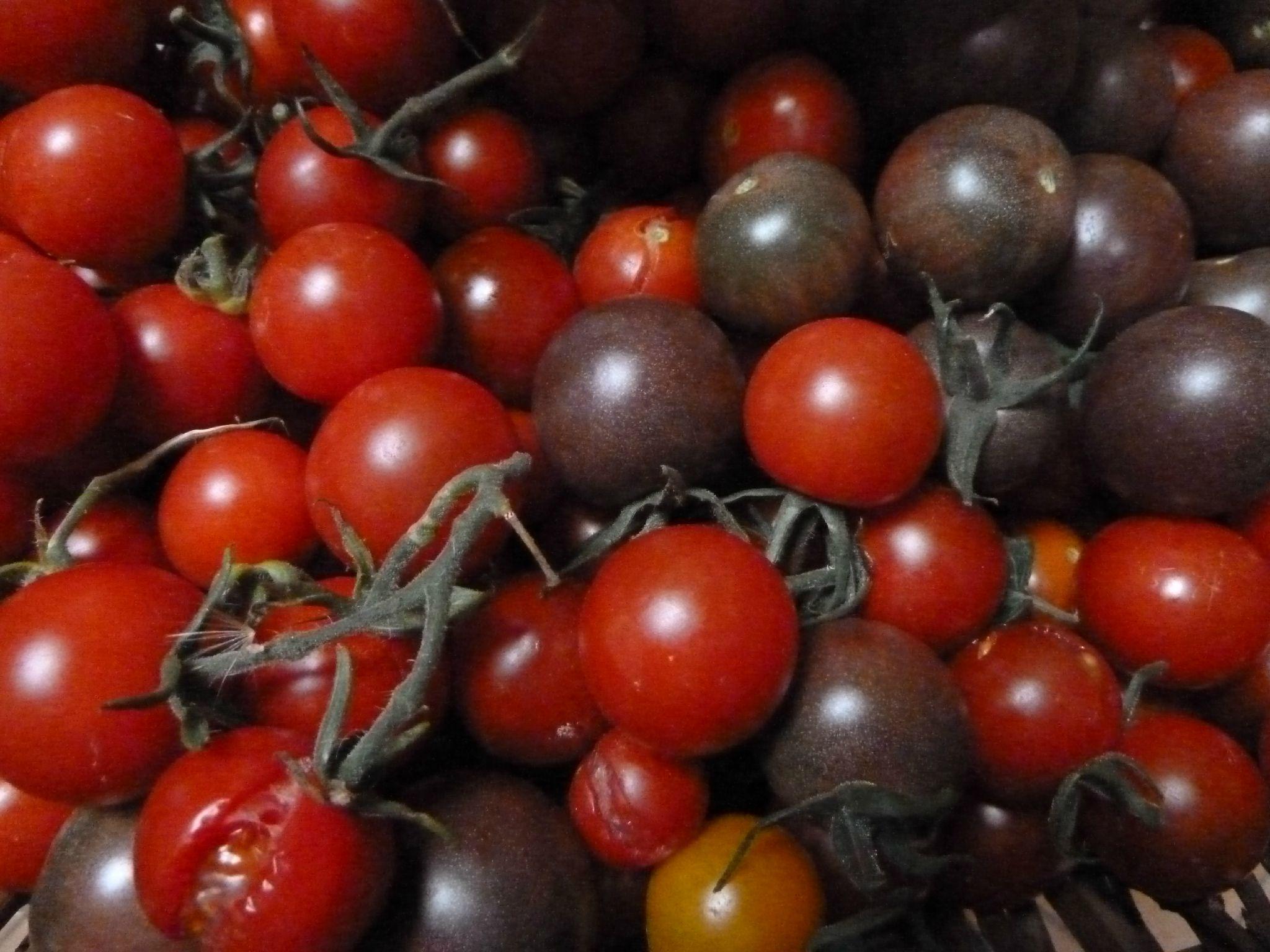 tomates cerises variées - www.passionpotager.canalblog.com