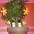 Rempotage d'une plante verte / fleurs de bach : star of béthléem (rescue), walnut