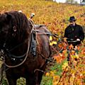 Un viticul