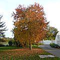 3 novembre - mais pourquoi les feuilles se font-elles si belles avant de s'envoler???