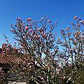 Magnolia 060216