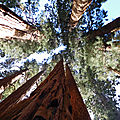 La californie... épisode 3 (Sequoia et <b>Kings</b> <b>Canyon</b>)