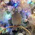 Passage de coco (le pigeon) pour les fêtes de fin d'année