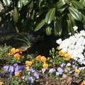 Fleurs noi