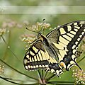 Insectes - Papillons