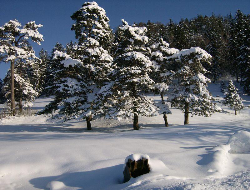 Un hiver aux Franches-Montagnes