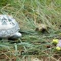 lulianne-tortue-3