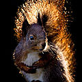Un écureuil de feuilles avec beya, 20 inscrite