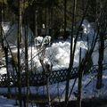 la forêt de glace