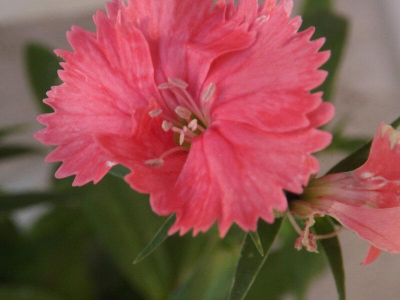 Fleurs du jardin (1)